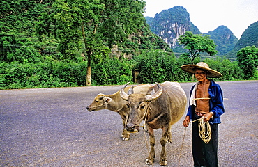 Man with oxen near the Li River in Guilin China