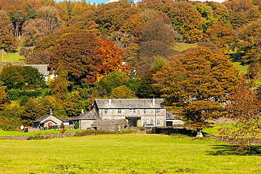 Autumn landscape on the Esthwaite Water shore in the Lake District National Park, Cumbria, England, UK, Europe