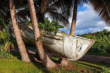 Boat in a tree, near Punta Tuna, Puerto Rico
