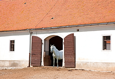 Slovenia Lipica Lipizzaner horses farm.