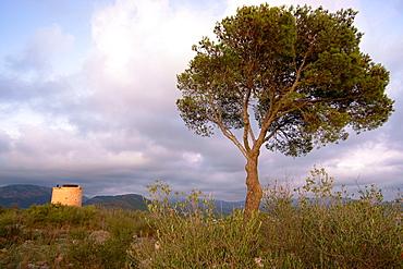Torre des Cap Andritxol, XVI century, Andratx, Ponent County, Mallorca, Balearic Islands, Spain