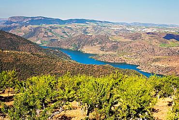 Arribes del Duero from the Vilvestre viewpoint Mieza Salamanca Castilla Leon Spain