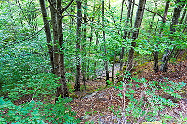 Beechwood near Puente Ra stream in Villoslada de Cameros Natural Park of Sierra Cebollera Logrono La Rioja Spain
