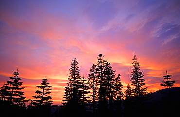 Tahoe forest Tahoe Sierra Nevada, California, United States