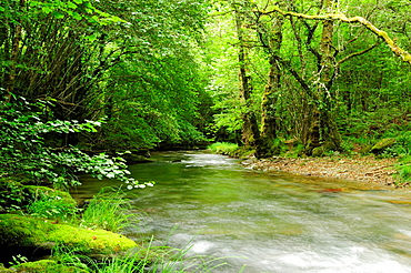 River Lor and forest O Courel mountains, Lugo, Galicia, Spain