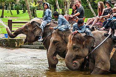 Tourists and handlers riding rescued Sumatran elephants at the Elephant Safari Park at Taro, Bali, Indonesia