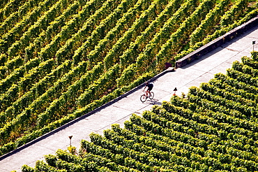 Vineyards Sightseeing From The Bicycle, Lavaux, Unesco, Switzerland