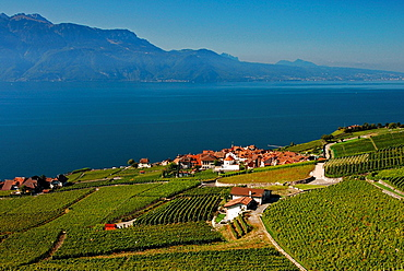 Geneva Lake, Vineyards Of Lavaux, Unesco Heritage, Alps In Background, Switzerland