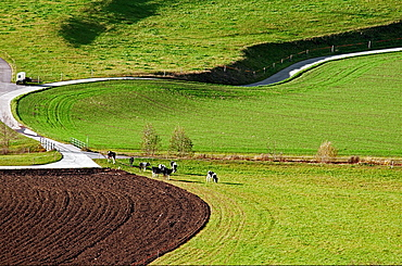Ruralscape, Fribourg Canton, Switzerland