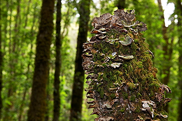 Tree stump covered with moss and tree fungus
