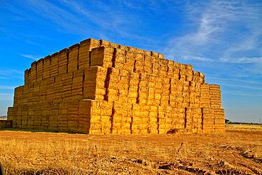 Straw Bales, landscape field, near Consuegra, Castile La Mancha, Spain