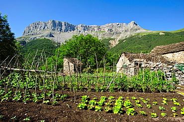 Huerta en Escuain Comarca de Sobrarbe Pirineos Huesca.