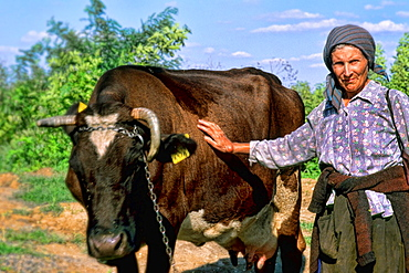 Albania close up of woman with cattle outside Tirana Albania