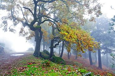 Fog in the Graja gorge in the Sierra de Gredos Piedralaves avila Castilla Leon Spain
