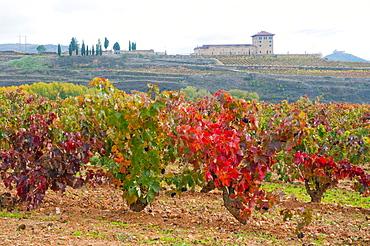 Vineyard and wine cellar. La Sonsierra, La Rioja province, Spain.