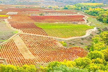 Vineyards in autumn. Briones, La Rioja province, Spain.