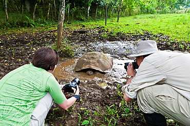Guests from the Lindblad Expedition ship National Geographic Endeavour photograph a wild giant tortoise on Santa Cruz Island in the Galapagos Islands, Ecuador
