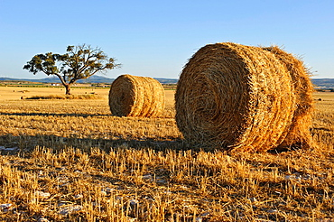 Straw Bales and cereal field, Almansa Albacete.