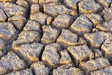 Earth cracked by drought Laguna de Petrola Albacete.