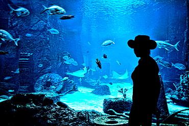 Fabulous aquarium full of exotic fish at Atlantis Resort in Paradise Islands Bahamas with woman looking at fish