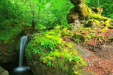 Cascade of a tributary stream of the river Cares  National Park Picos de Europa