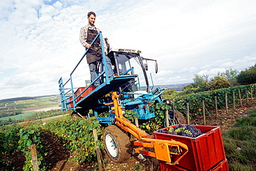 Mechanical harvesting, Aube department, Champagne-Ardenne region, France, Europe