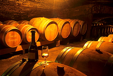 Champagne marc barrels, Moutard-Diligent cellar, Buxeuil, Aube department, Champagne-Ardenne region, France, Europe