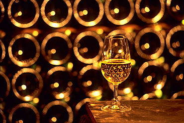 Glass of Champagne in the Leblond-Lenoir cellar at Buxeuil, Aube department, Champagne-Ardenne region, France, Europe