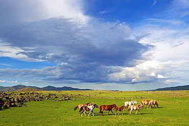 Mongolia, Ovorkhangai province, Okhon valley, horse drove