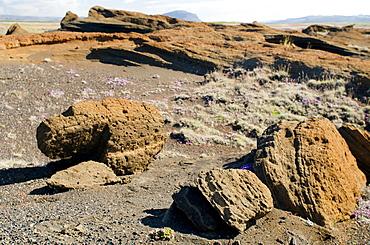 Hekla vulcano area, Iceland