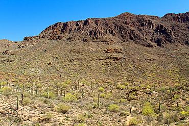 Saguaro National Park, Sonora Desert, Arizona, Tucson, USA