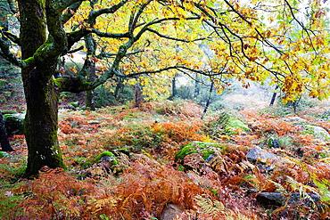 Vegetation at the Graja gorge in the Sierra de Gredos Piedralaves Â¡vila Castilla Leon Spain