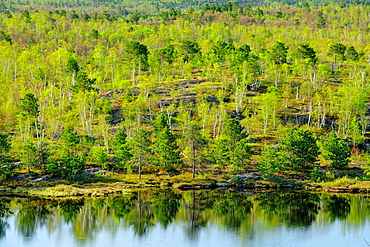 Deciduous trees with emerging spring foliage and pines on the shore of a small lake, Greater Sudbury, Ontario, Canada