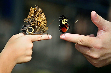 Visitors with butterflies perched on fingers, Niagara Butterfly Conservatory, Niagara Falls, Ontario, Canada