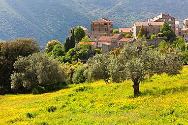 France, Corsica, Corse-du-Sud Department, La Alta Rocca Region, Ste-Lucie de Tallano, elevated town view with olive groves