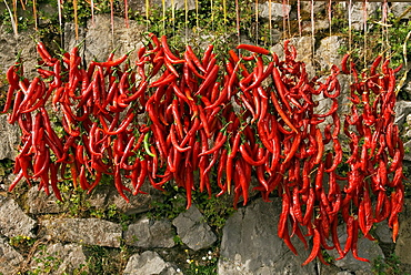 red pepper, Campania region, southern Italyy, Europe