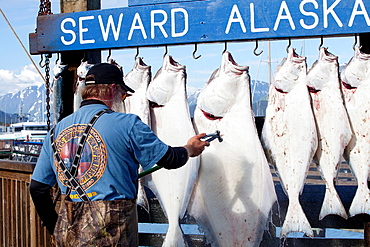 Fishing activities in the harbour of Seward, Kenai Peninsula, Alaska, USA