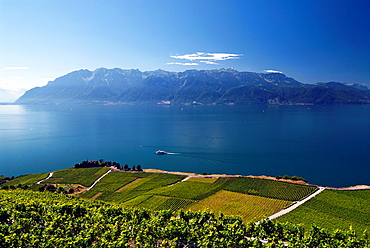Landscape of Swiss Riviera, Vineyards in Lavaux, Unesco Heritage, canton Vaud, Geneva Lake, Lac Leman, Switzerland, view for Alps in the background, steamboat cruising in front