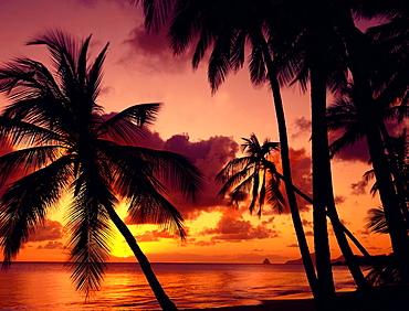 Caribbean, Martinique, Salines Beach, sunset