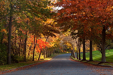 looking down a curving asphalt street flanked by the foliage of autumn trees.