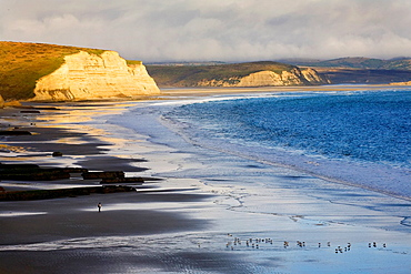 Drakes Beach, Point Reyes National Seashore, Marin County, California, USA, cliffs, Drakes Bay, entrances to Drakes Estero and Limantour Estero in distance, gulls and lone hiker on beach, ocean fog overhead