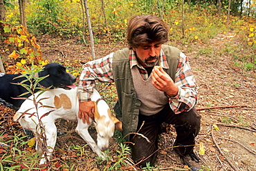 truffle picking with dogs, La Casa del Trifulau, Costigliole d'Asti, province of Asti, Piedmont region, Italy, Europe