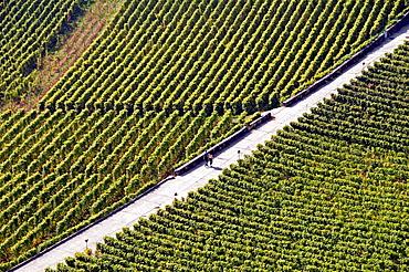 young couple walking across vineyards, Lavaux vineyards, Unesco heritage, Swiss Riviera, canton Vaud, Switzerland, Lake Geneva shore