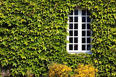 France, Normandy Region, Manche Department, St-Germain des Vaux, window detail
