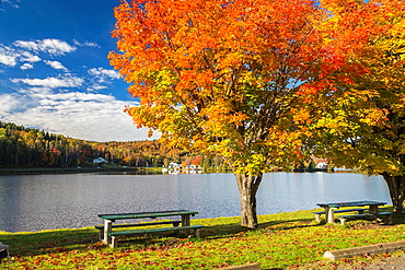 Colorful tree and bench overlooking Joes Pond in the Indian Summer, Vermont, USA