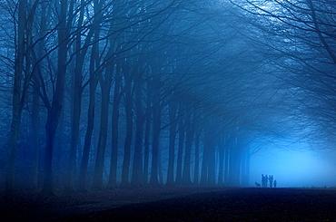 Beech Avenue at dusk Norfolk UK Early November