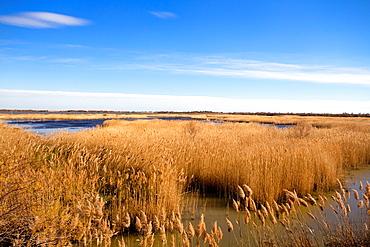 Marsh, Les Saintes Maries de la Mer, France