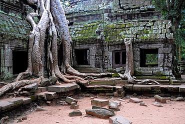 Ta Prohm ruins with kapok tree at Angkor Wat, Cambodja