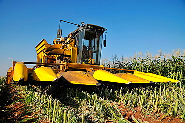 A John Deere Corn picker in a corn field ready for harvesting  Photographed in Israel, Golan Heights