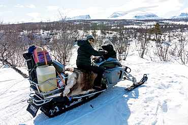 Woman driving snowmobile in winter landscape in mountain area in swedish lapland